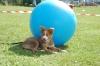 So ein Treibball dient auch als Schatten :)