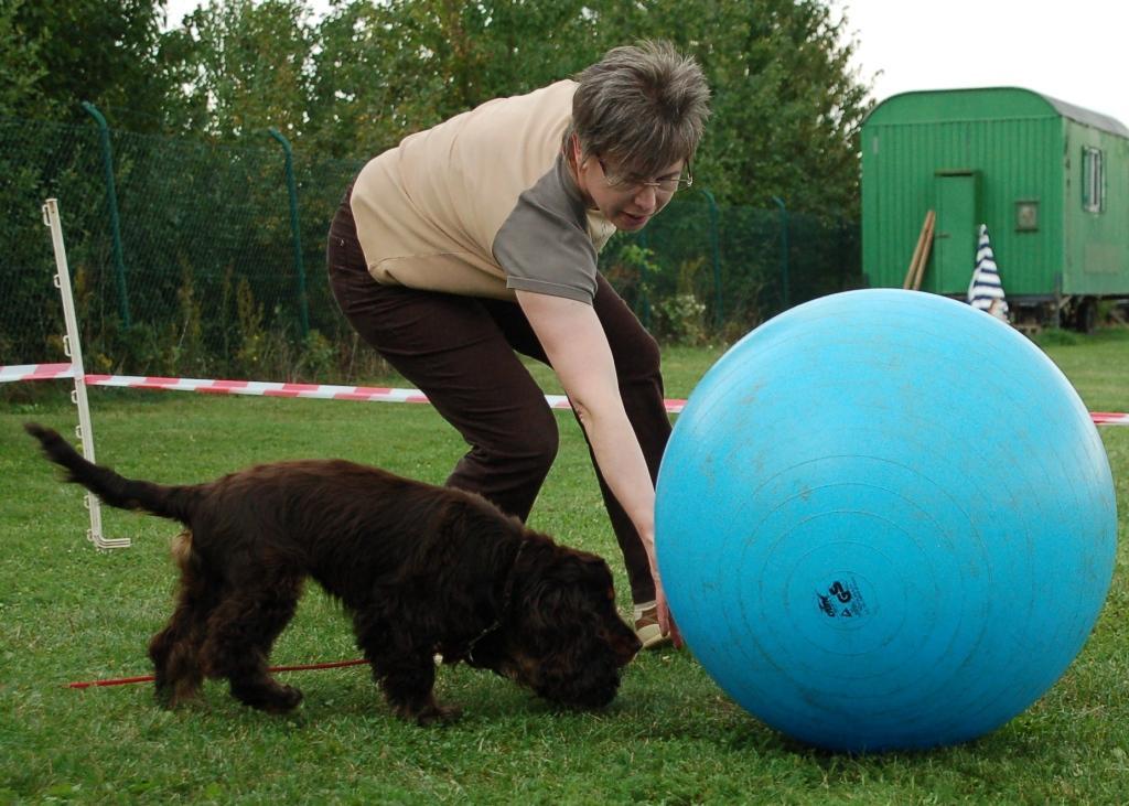 Mensch und Hund stupsen den Ball gemeinsam an
