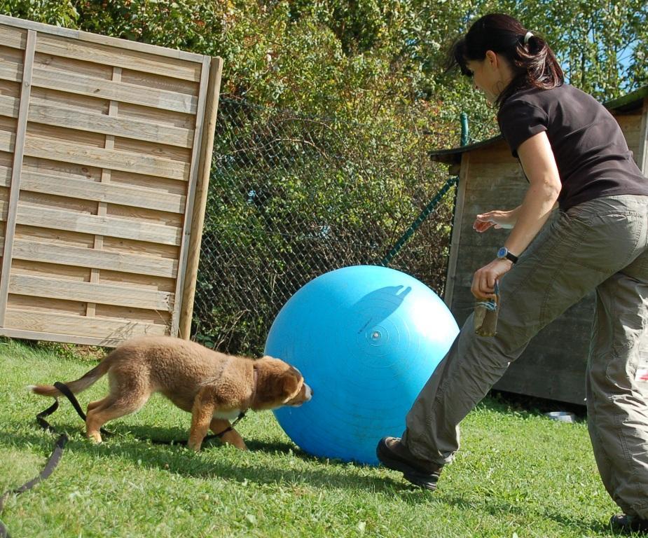 Mensch und Hund spielen gemeinsam Treibball