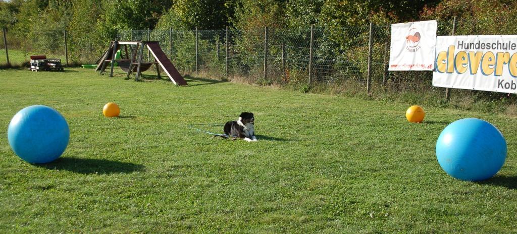 Hund wird in alle vier Himmelsrichtungen dirigiert