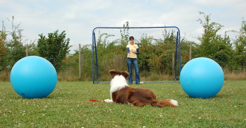 Hund links und rechts dirigieren