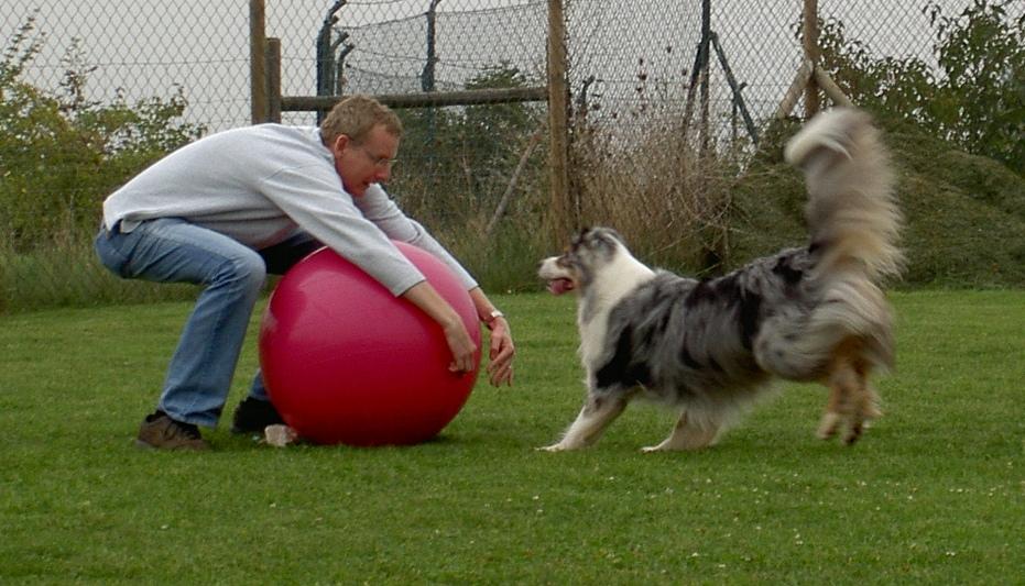 Mensch und Hund spielen Treibball