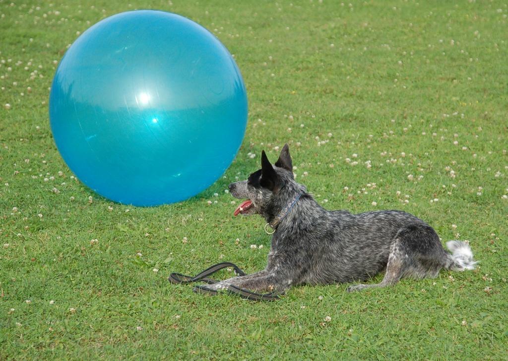 Übung Leine, Hund liegt auf der Leine