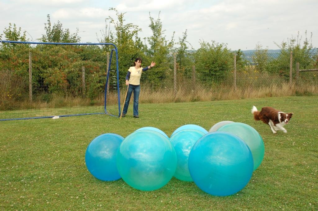 Treibball, Distanzkontrolle