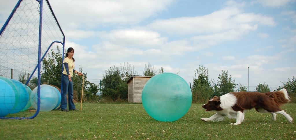 Ball ins Tor treiben