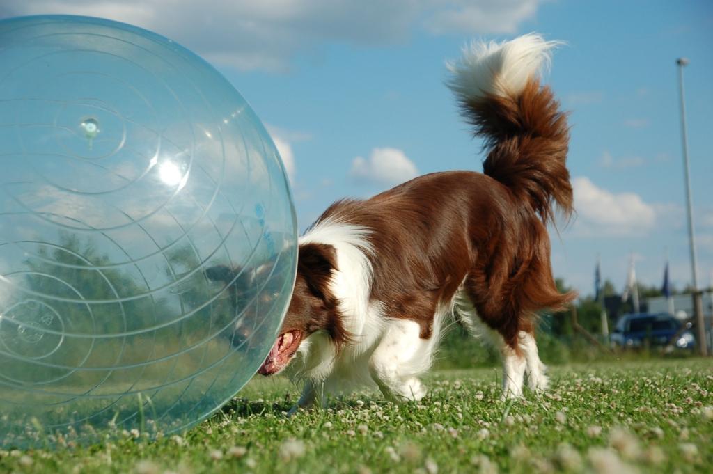 Ball schieben